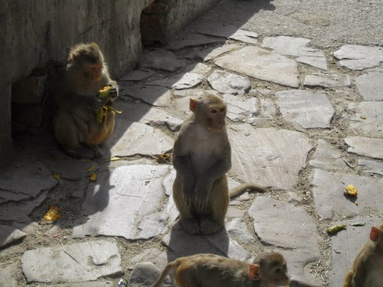 Galtaji Monkey Temple, Jaipur (source - MikeC)